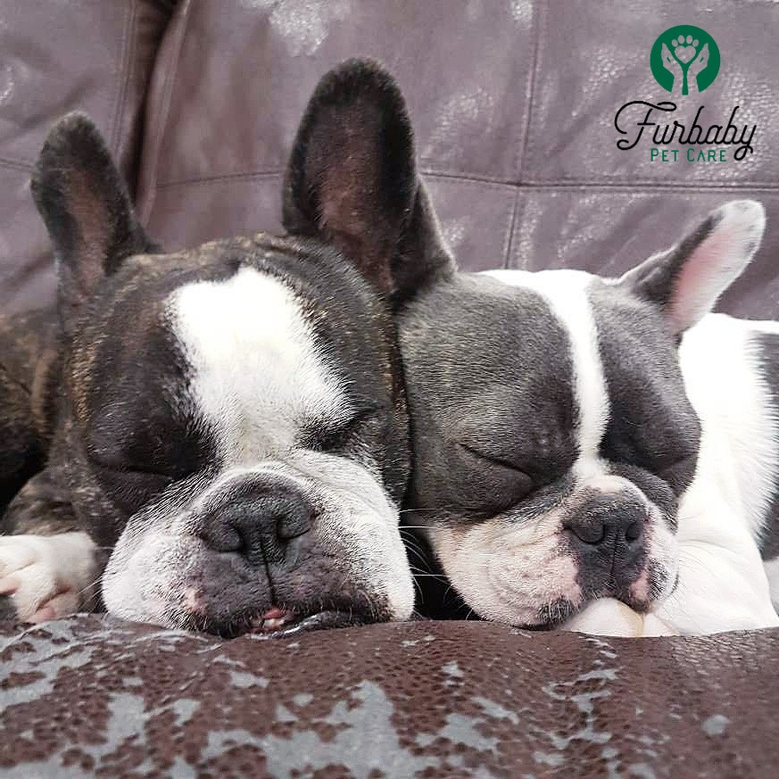 Two dogs sleeping next to each other at Furbaby Pet Care Saskatoon