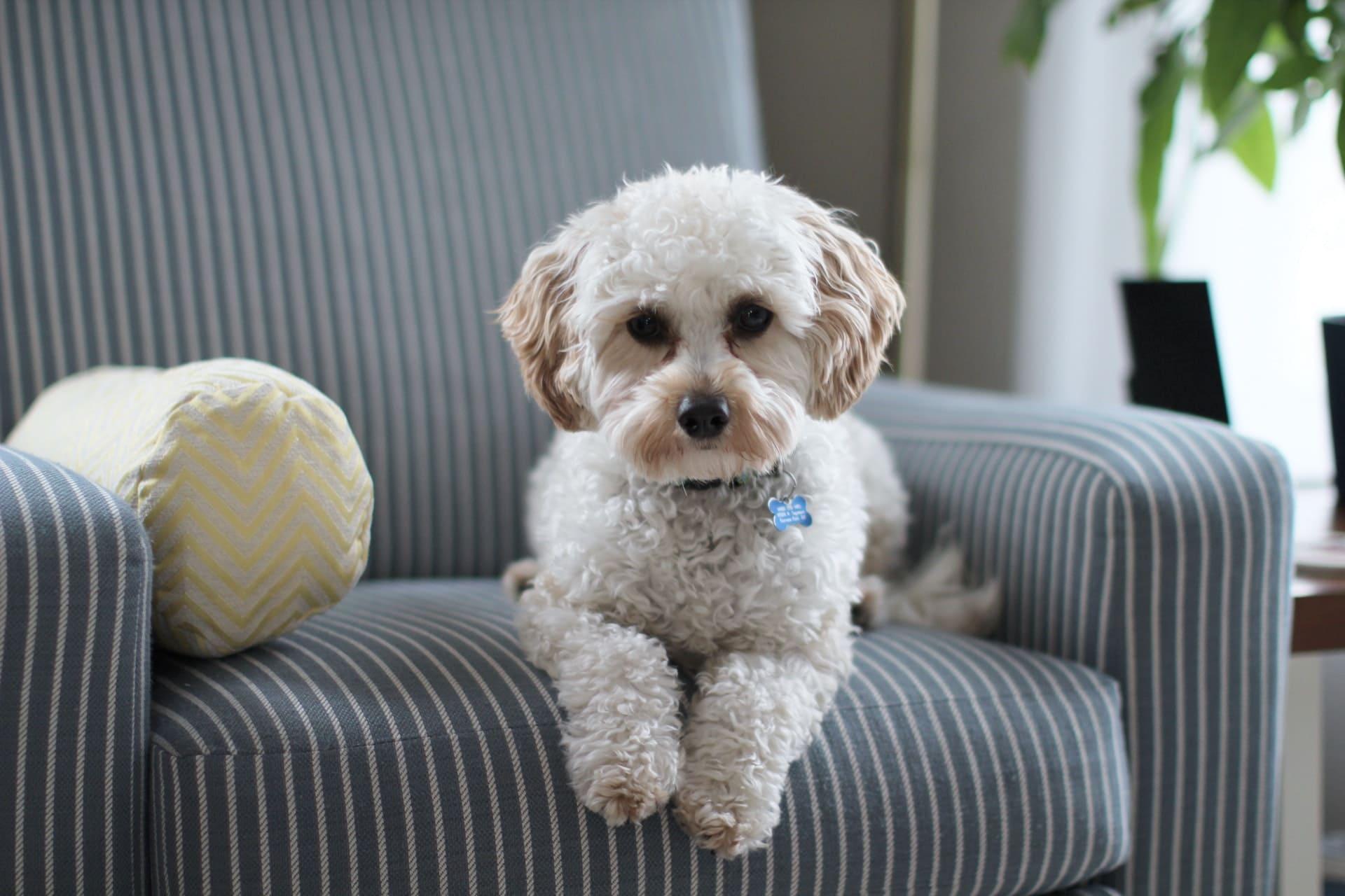 dog-on-comfy-chair