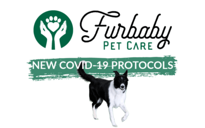 Furbaby Pet Care has new protocols in place to protect you & your pets during COVID-19