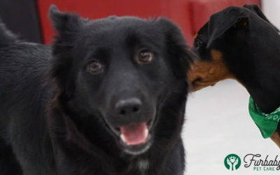 Kennel cough: what Furbaby Pet Care is doing to keep your dog safe and sound