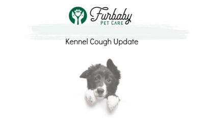 Update on Kennel Cough