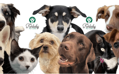 A big thank you! And some gentle reminders from all of us at Furbaby Pet Care