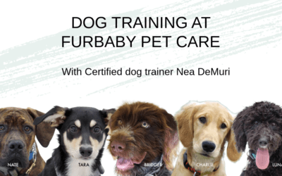 Dog training at Furbaby Pet Care! Find the right class for you and your puppy